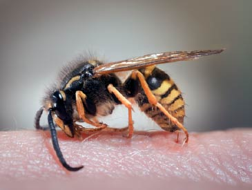 insect_control_wasp